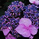 Bright Hydrangea  by Tori Snow
