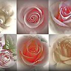Magical Roses by Art-Motiva