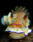 Nudibranch - Chromodoris Collingwoodi by Henry Jager