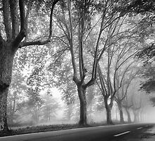 Along a Misty Lane by Mieke Boynton