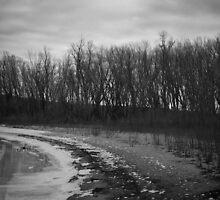 Wintertime Shoreline by ddskphoto