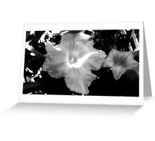 Squash Blossoms _F Greeting Card