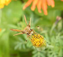 Insect and Flower Close-Up, New York Botanical Garden, Bronx, New York by lenspiro