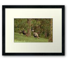 Holy Hill Turkeys Framed Print
