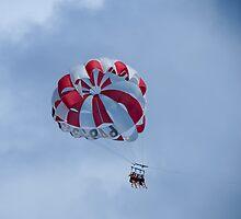 Paraglider. by Anne Scantlebury
