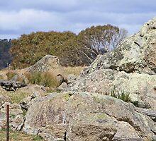 Triangular Granite rock in a paddock by Kelly Walker