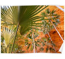 Purnululu Palms  Poster