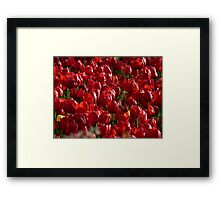 Tulip Field Tulips Red Strong Farbenpracht Framed Print