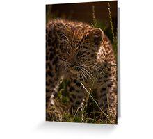 Amur Leopard Cub Greeting Card