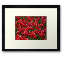 Tulip Field Tulips Red Closed To Tulpenbluete Framed Print