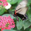 flutterfly by Judd3rman