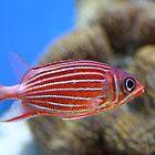 Fishy fishy by Judd3rman