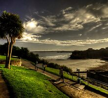 Palm over Towan Beach by Rob Hawkins