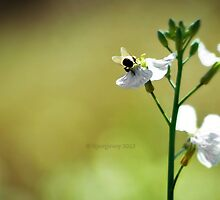 Bumble Bee Butt by ibjennyjenny
