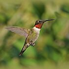 Ruby-Throated Hummingbird in Flight by Sandy Keeton