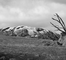 Granite formation on a hill in Black & White by Kelly Walker