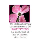 Pink Flower with Quote by Kelly Walker