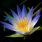 Water lily by Dennis Wetherley