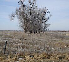 Kansas Icy Morning in a field by ROBERTDBROZEK