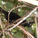 Kitten/Climbling up tree -(280812)- Digital photo by paulramnora