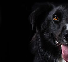 Half a dog by Karen Havenaar