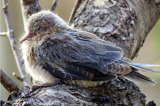 Shhhhhh.....I'm sleepy! by Elizabeth Kendall