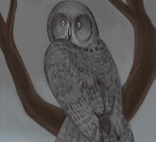great grey owl by unknownbinaries