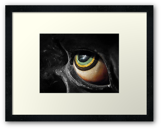 The Eye by Ellen Cotton