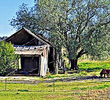 Rustic Charm by Terry Everson
