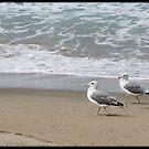 Two gulls by Lynn Starner