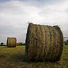 Hay ball by Alvise Busetto