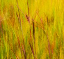 A prairie impression - Irwin Prairie Nature Preserve  by Mitch Labuda