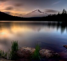 Trillium Twilight by Leasha Hooker