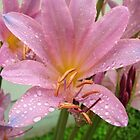 Lily in The Rain by Ron Russell