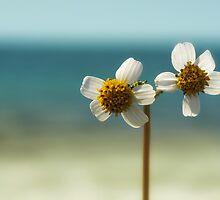 sweet sunshine II by © Karin  Taylor