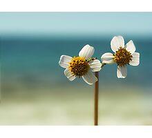 sweet sunshine II Photographic Print