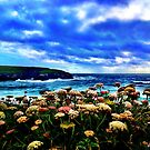 Stormy Sea and Flowers in Cornwall.. by Wonkstar