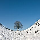 Sycamore Gap on a winter's day by Joan Thirlaway