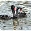 The lovebirds of Ponder Bay. by shortshooter-Al