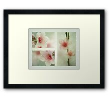Spring in The Southern Hemisphere Framed Print