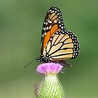 Wonderful World of Butterflies by pieceoflace photography by pieceoflace