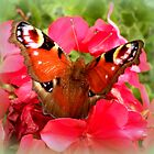 Peacock butterfly on geranium by The Creative Minds