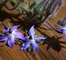 Borage by SmoothBreeze7