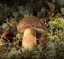 Cepe - Edible Mushroom by mrivserg