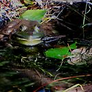 Green frog by AndreCosto