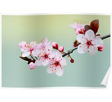 Early Spring Blossoms Poster