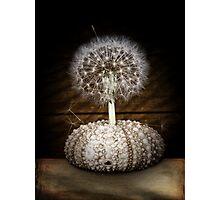 the dandelion tree Photographic Print