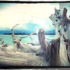 driftwood I by geophotographic