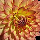 August Dahlia. by Lee d'Entremont