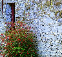 Stone Barn With Fuschia by Fara